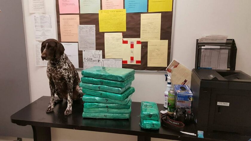 This undated photo released by the Los Angeles Airport Police shows multiple packages of cocaine wrapped in green cellophane that was apprehended at Los Angeles International Airport. JetBlue flight attendant accused of trying to sneak a suitcase full of cocaine through Los Angeles International Airport and making a dramatic dash to escape says she might not have been sure what was in her bag, a spokesman for her said Thursday, March 24, 2016, as prosecutors suggested she had smuggled before. (Los Angeles Airport Police via AP) MANDATORY CREDIT