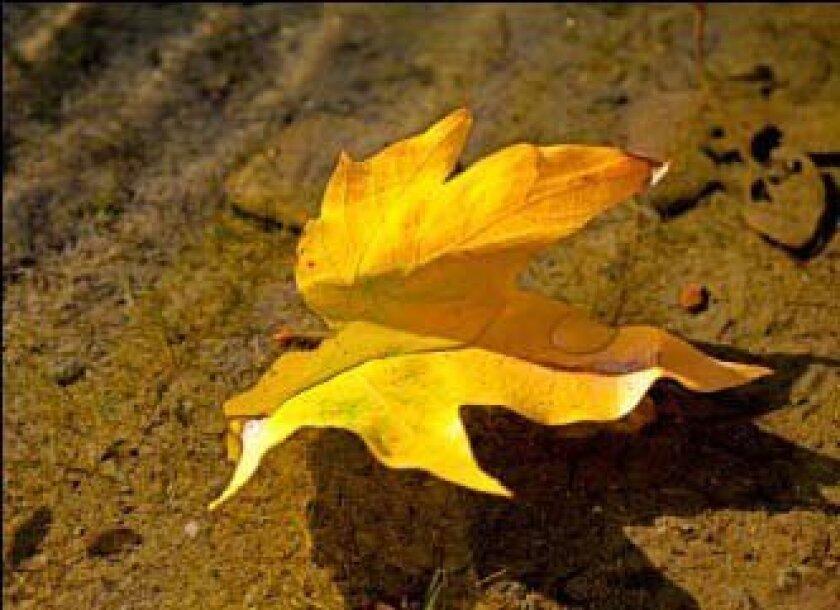 """Manss Aval """"Autumn Still"""""""