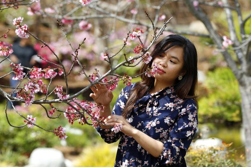 14th annual Cherry Blossom Festival