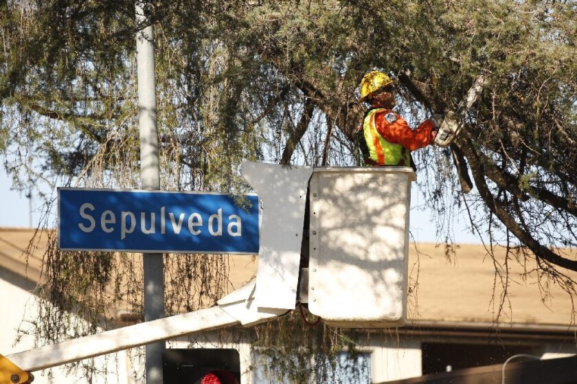 Crews trim tree branches at a Sepulveda Boulevard intersection known to be used for illicit sex.