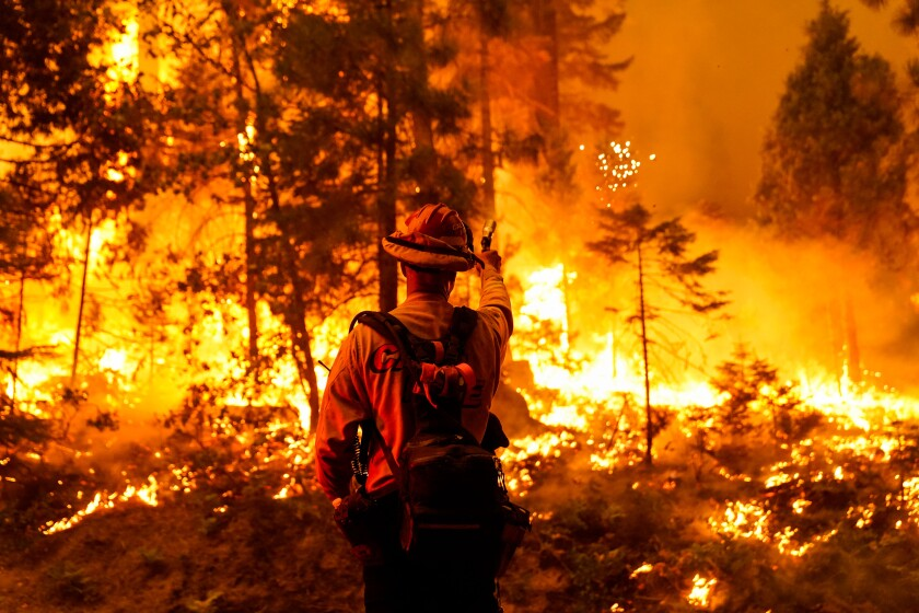 A firefighter holds a torch as bright orange flames eat away at grass and trees in a forested area