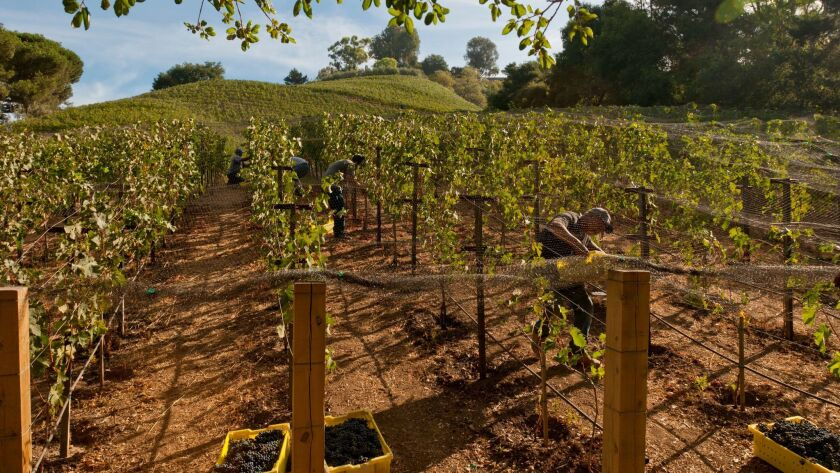 Rupert Murdoch intends to keep everything as it is at the vineyard.