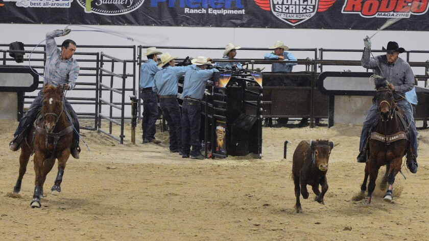 Lassos at the ready, two competitors on horseback chase a calf during last year's World Series of Team Roping Finale.