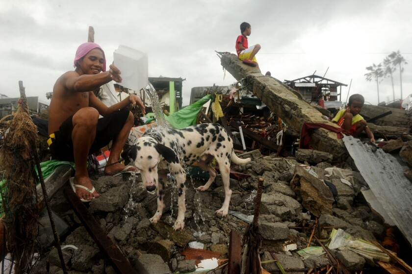 A man bathes his pet dog amid the rubble left by Typhoon Haiyan in the Philippine city of Tacloban.