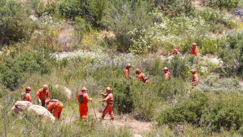 Inmate firefighters from the California Department of Corrections work to clear brush along Round Potrero Road.