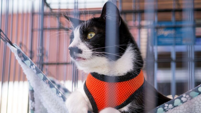 A cat in a hammock waits to be adopted at the 29th annual America's Family Pet Expo at the Orange Co