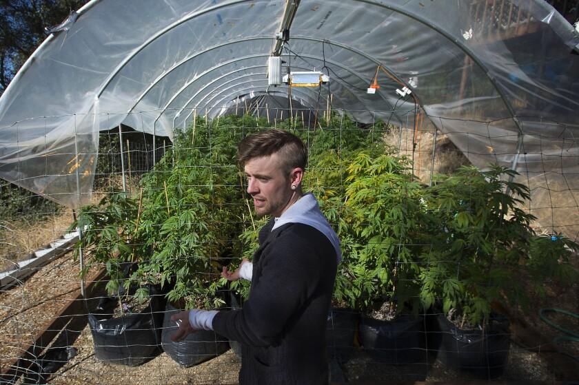 California pot farmers