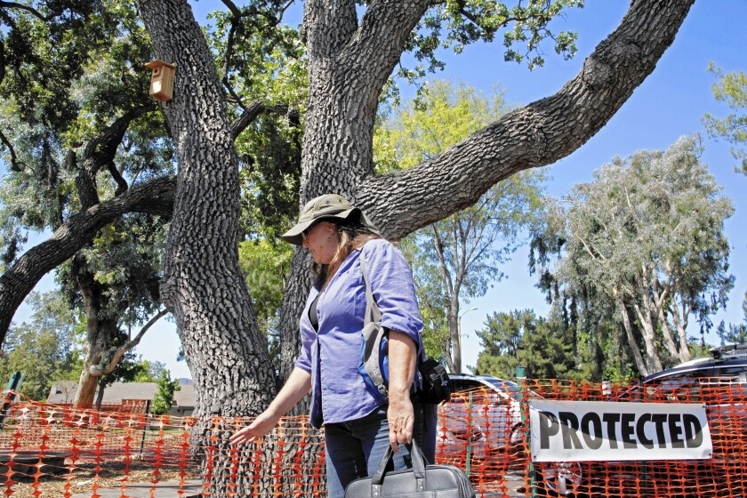 Thousand Oaks arborist Yvonne Brockwell says she and others had assumed the 170-plus trees that were felled for redevelopment were protected by law.