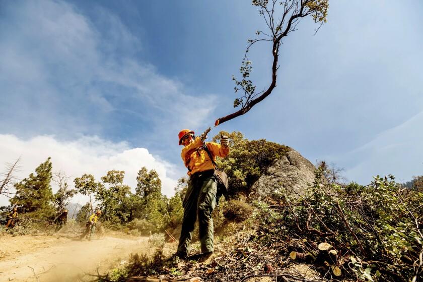 Un miembro del equipo Roosevelt Hotshot abre un cortafuegos para tratar de frenar el incendio Windy