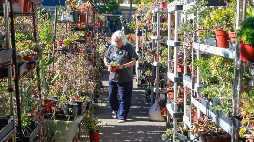 SAN DIEGO, CA January 2nd, 2019   Succulent grower Tina Zucker works in her garden on Wednesday in S