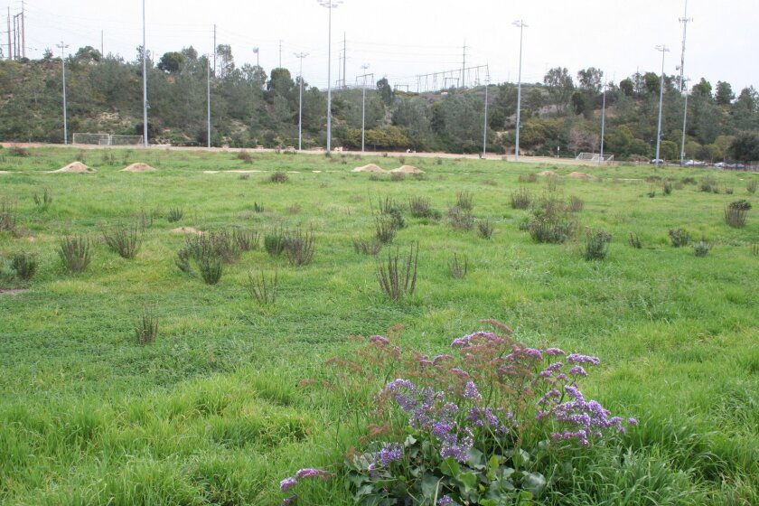 A vacant lot at Torrey Hills Community Park is the proposed site for a recreation center or YMCA.