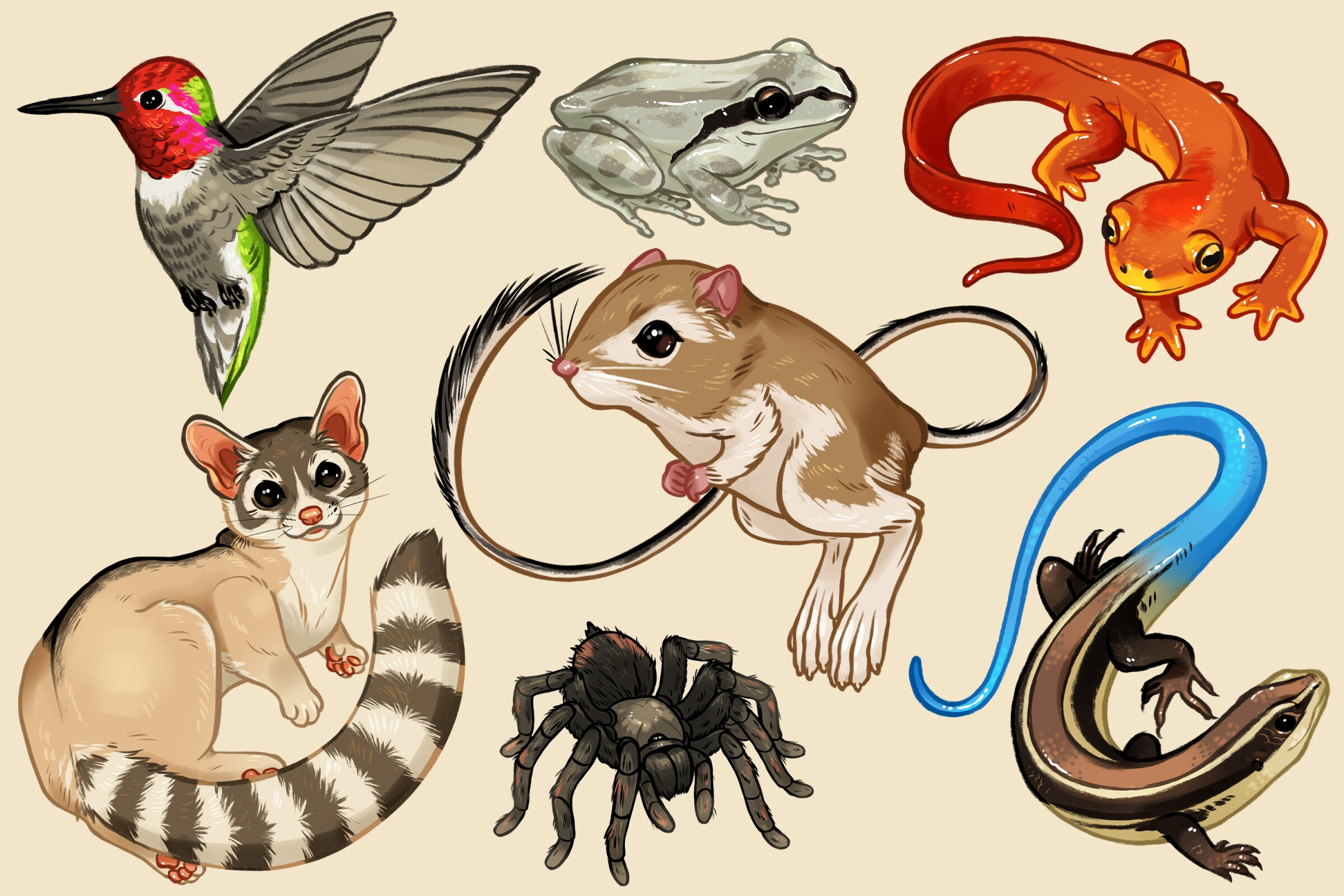An illustration of animals you can see on L.A.-area trails