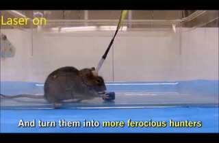 LA 90: Using lasers, scientists turn mice into ferociously efficient hunters