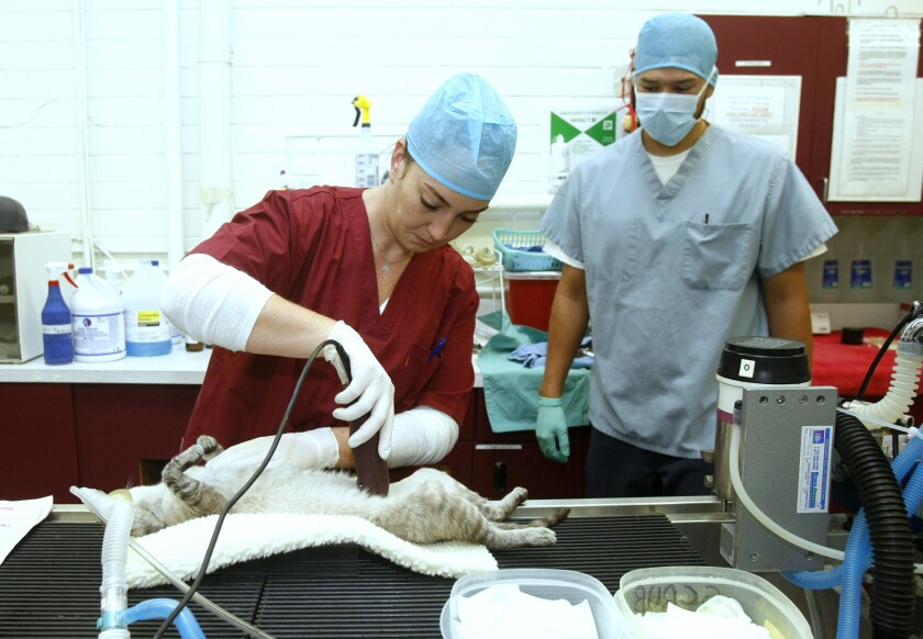 Let the Animals Live spay and neuter clinic