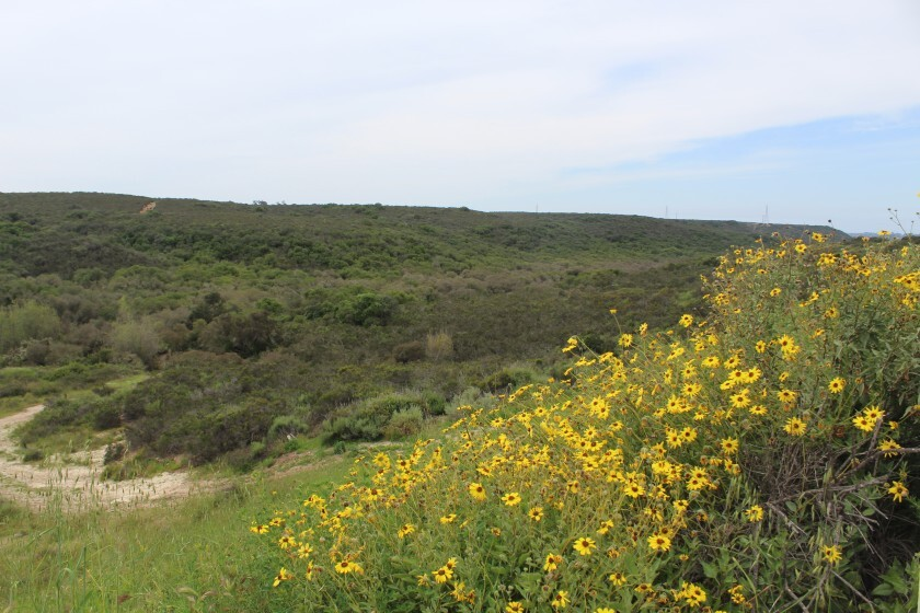 The Preserve at Torrey Highlands is proposed on and extension of Camino Del Sur, surrounded by the Del Mar Mesa Preserve.