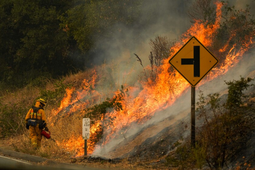 A firefighter lights flames in brush on a hillside for a controlled burn