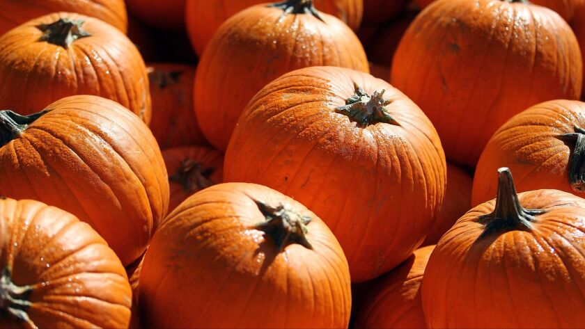 Pumpkin patches abound throughout San Diego County.