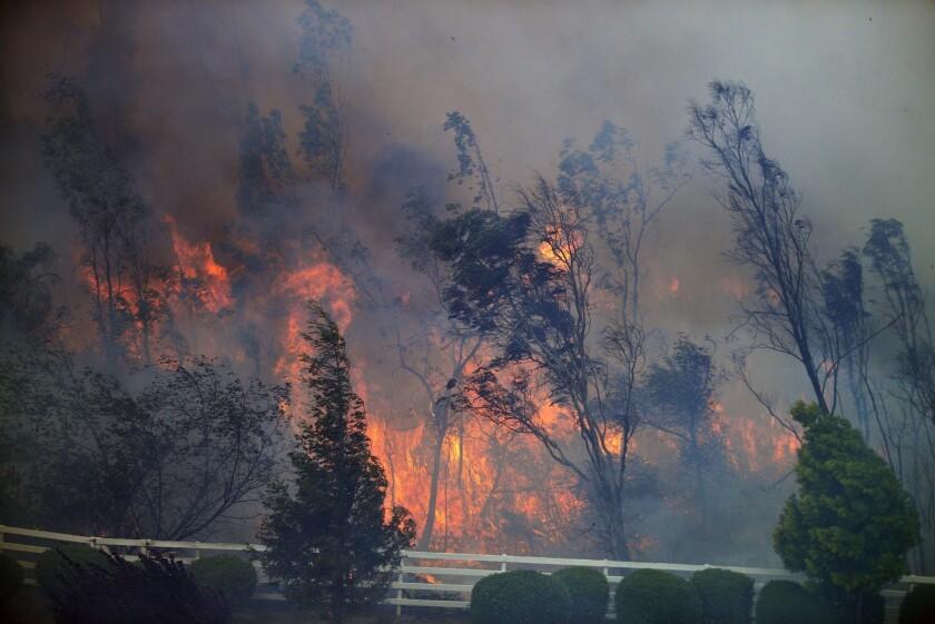 Trees burn as the Bernardo fire moves through a canyon between the Rancho Santa Fe and Fairbanks neighborhoods north of San Diego.