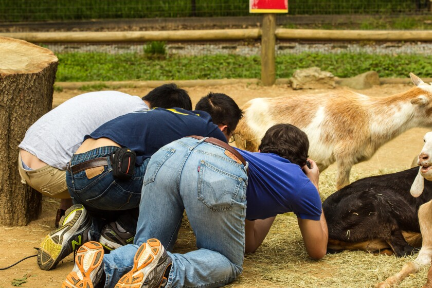 Georgia Tech researchers gather urination information from goats at Zoo Atlanta.
