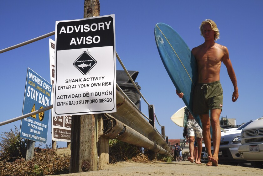 A sign warning beachgoers about shark activity is posted at the top of the trail leading down to Beacon's Beach in Encinitas, California.