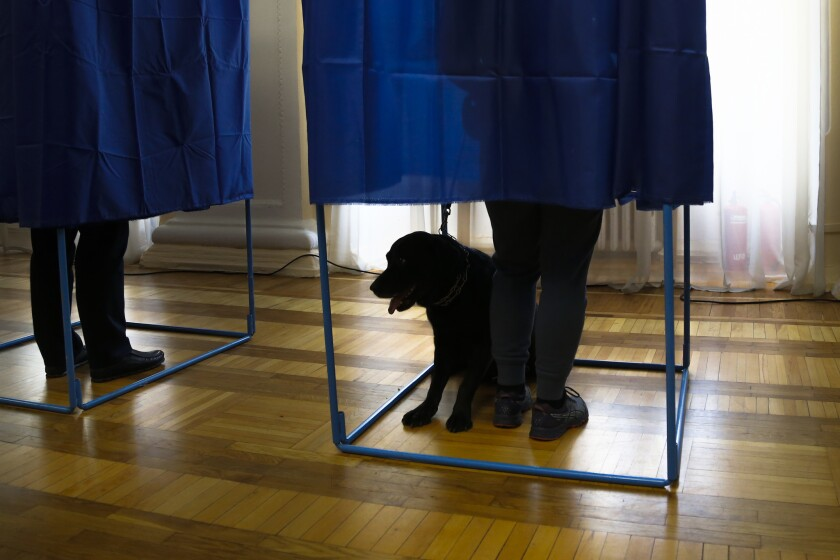 A dog waits as voters fill their ballots before casting at a polling station during the presidential
