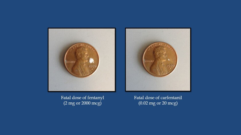 A comparison of the fatal doses of fentanyl, left, and carfentanil from a Department of Justice pres