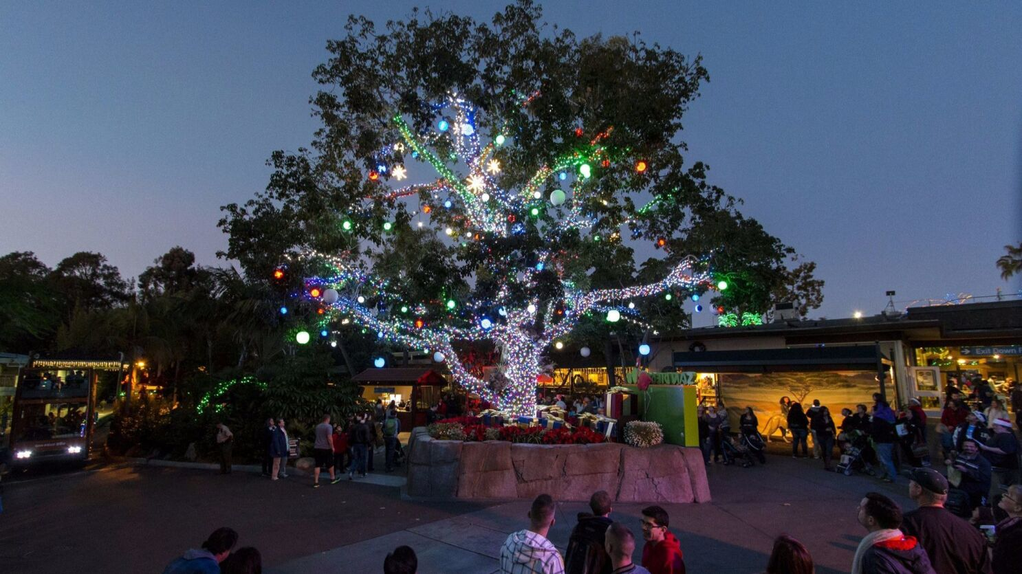 San Diego Zoo Christmas 2020 San Diego Zoo rings in the holiday with annual Jungle Bells   The