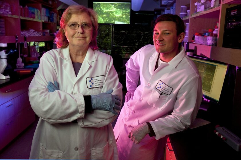 Jeanne Loring, director of the Center for Regenerative Medicine at The Scripps Research Institute, and Andres Bratt-Leal, a member of Loring's lab who works on the stem cell project for eight Parkinson's disease patients.