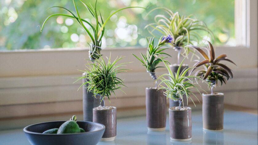 DESIGN PROBLEM: A unique centerpiece that's longer-lasting than a vase of cut flowers SOLUTION: Mul