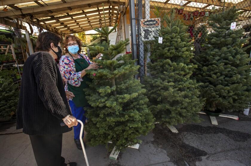 Maria Luz Lopez helps longtime customer Angela Zacarias pick out a Christmas tree at Avalon Nursery & Ceramics.