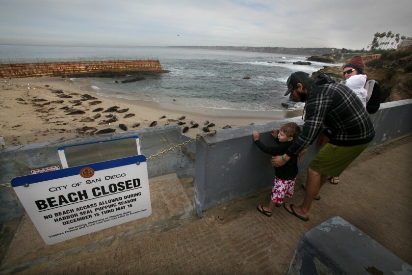 Corey Stewart, originally of San Diego, helps his son Emmett Stewart, 3, up to see the seals in La Jolla as Nia Stewart carries their daughter Sora Stewart, 1. The family is visiting from Minnesota for the holidays and decided to stop and see the seals before heading to Tourmaline to introduce