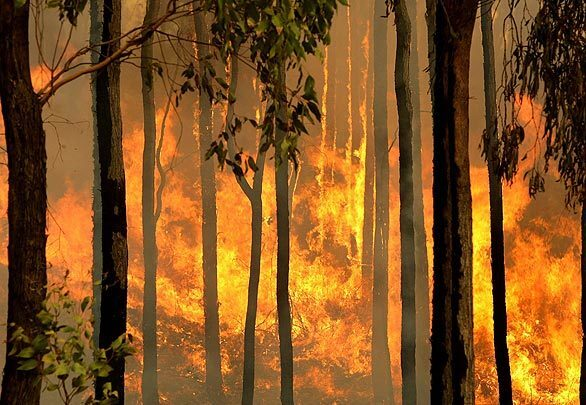 Deadly wildfires in Australia