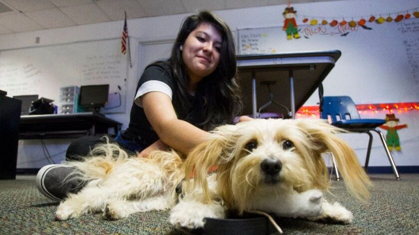 A LifeSchool student on the Southwest High campus plays with Marty, a licensed therapy dog.