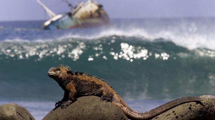 Plight of the Iguana