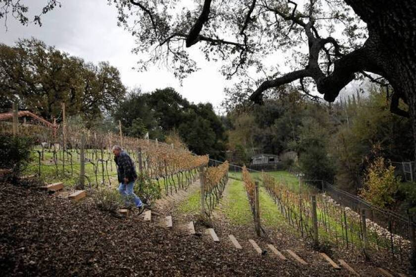 Tim Carpenter walks through Compa, the vineyard on the Newhall property he co-owns with his brother Chris. They produce about 125 gallons of wine a year.