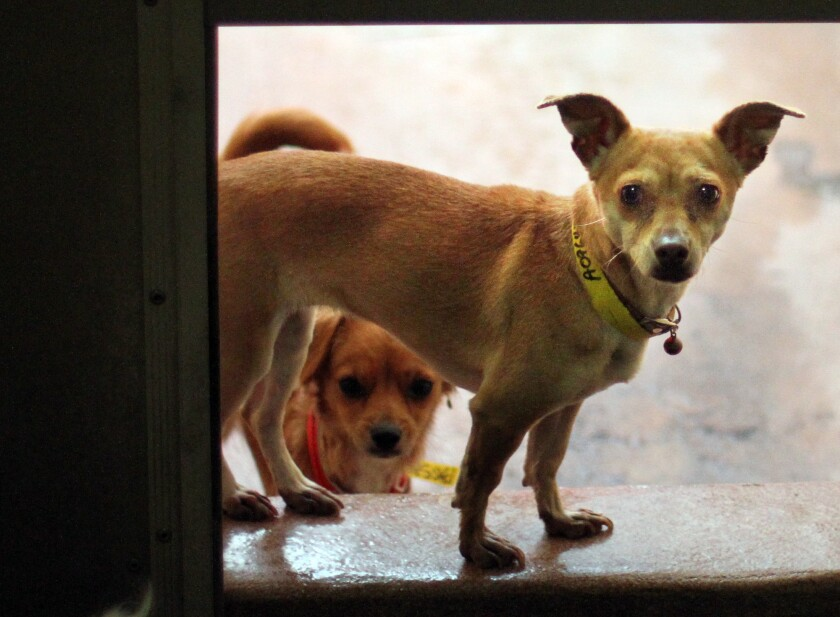 New staffing plan for L A  animal shelters stalls after