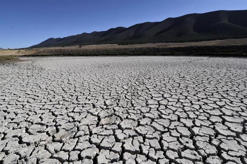 Sequías son responsables de la muerte de grandes árboles, según un estudio