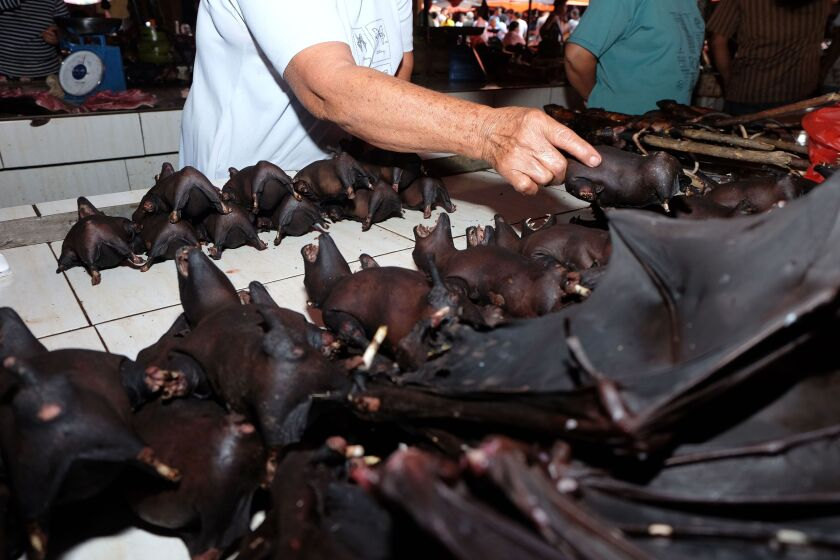 Indonesia bat vendor