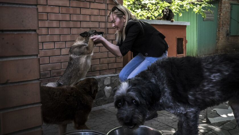 Katya Kuzmenko, an animal-rights activist playing with dogs at the Totoshka dog shelter in Rostov-on-Don. The Totoshka dog center was founded by Margarita Karpova. It's the only center in the region that sterilizes stray dogs.
