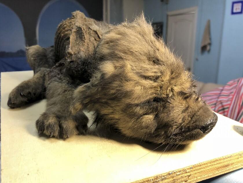 Permafrost puppy