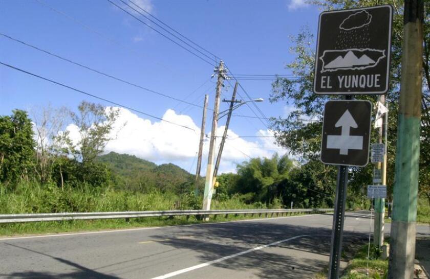 Un cartel en la carretera indica el camino que lleva al Bosque Nacional del Caribe, en Puerto Rico, que desde 2007 se llama Bosque Nacional de El Yunque, por una orden ejecutiva firmada por Bush. EFE/Archivo