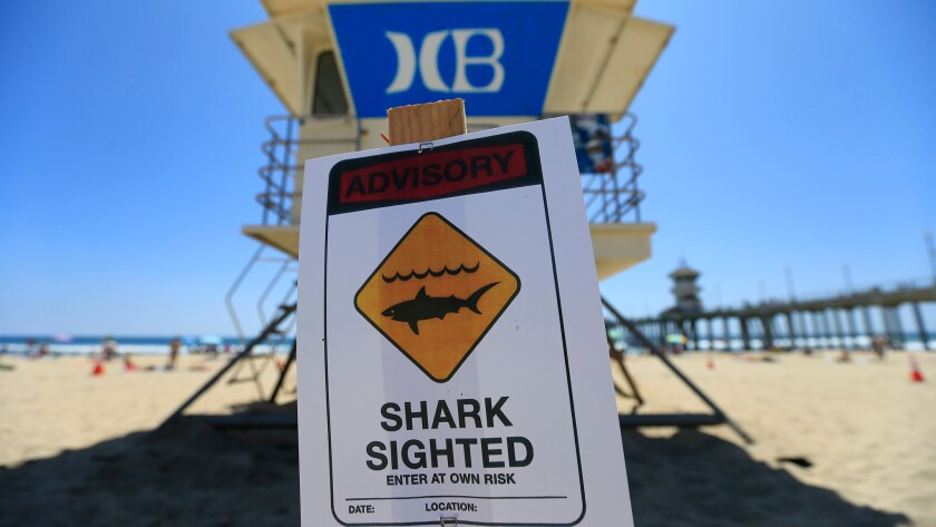 Huntington Beach lifeguards posted a shark sighting sign behind Tower 1 to warn beach-goers after a surfer spotted a 6-foot great white shark in August 2015.