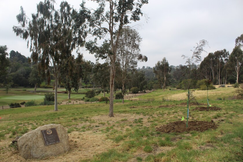 New trees planted at the Rancho Santa Fe Association's arboretum.