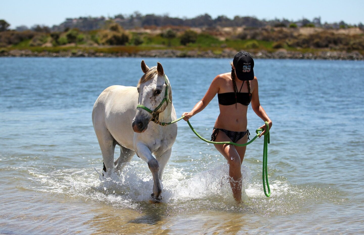 Fiesta Island, a cool place for horses