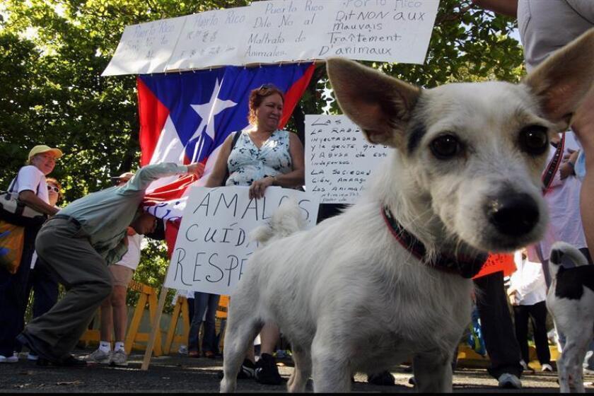 """La primera dama de Puerto Rico, Beatriz Rosselló, dijo hoy en un comunicado de prensa que respalda la iniciativa """"Spayathon for Puerto Rico"""", que tiene como propósito el reducir el número de animales abandonados en la isla. EFE/ARCHIVO"""