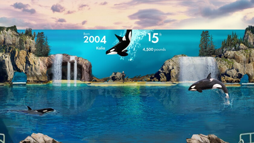 Concept art of the Orca Encounter show coming to SeaWorld San Diego this summer.