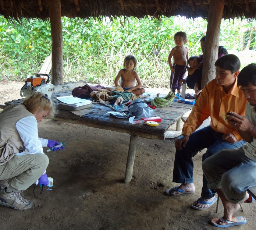 In this photo provided by Science Advances shows microbiologist Maria Gloria Dominguez-Bello, collecting temperature information of the floor at one of the Checherta huts. Whether it's a jungle hut or a high-rise apartment, your home is covered in bacteria, and new research from the Amazon suggests
