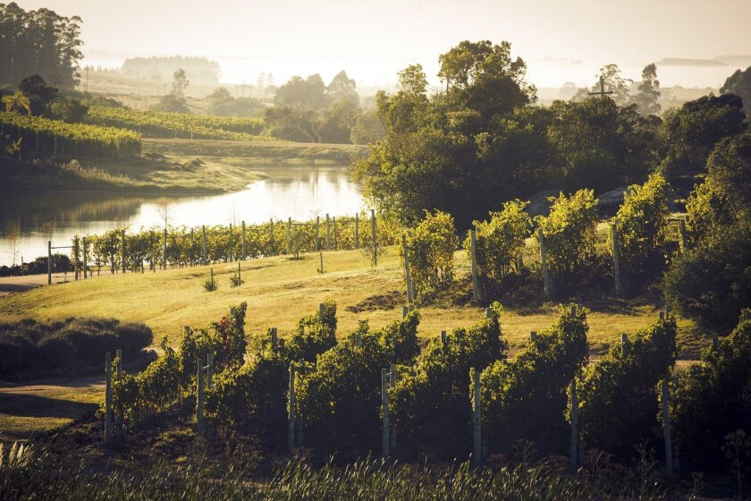 The Garzón region consists of rolling green hills, and its terroir mimics that of Tuscany.