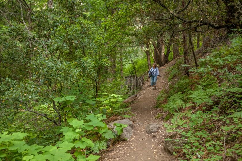 Palomar Trail.jpg