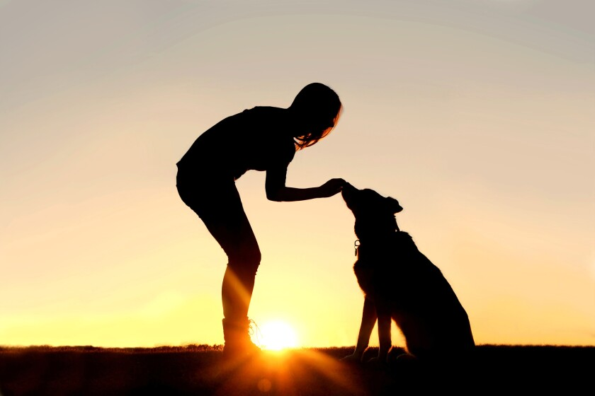 According to an annual survey conducted by the American Pet Products Assn., 65% of American households (79.9 million) are currently home to a pet.